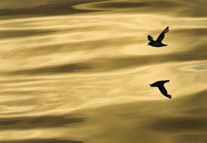 Ein Vogel fliegt in der Abendsonne über das Meer – Romantik pur!